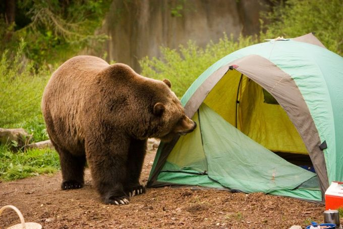 Animal safety on camping