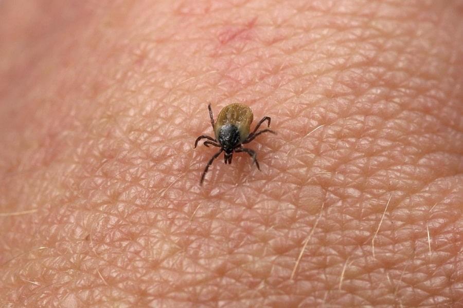 Diseases Caused by Ticks