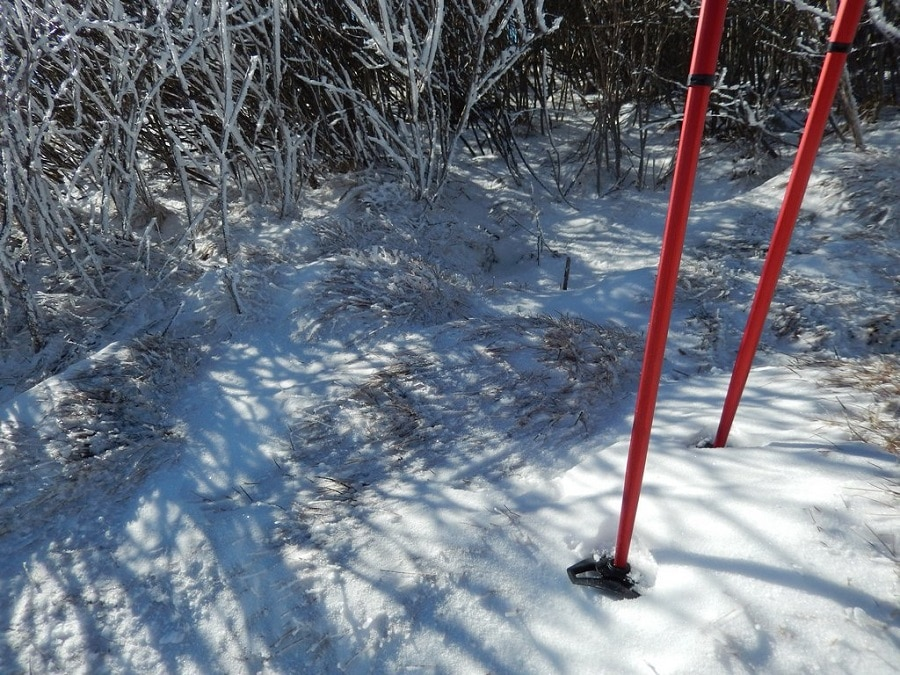 Hiking poles with snow baskets