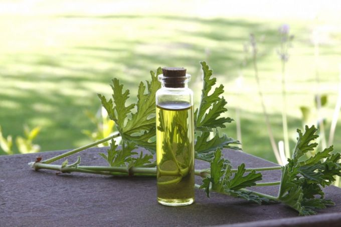 Home made insect repellent made from herbs