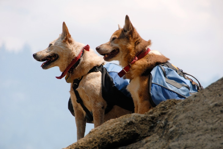 Dogs on hike
