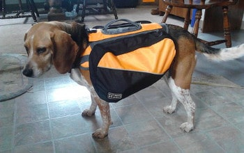 Outward Hound Kyjen Dog Backpack
