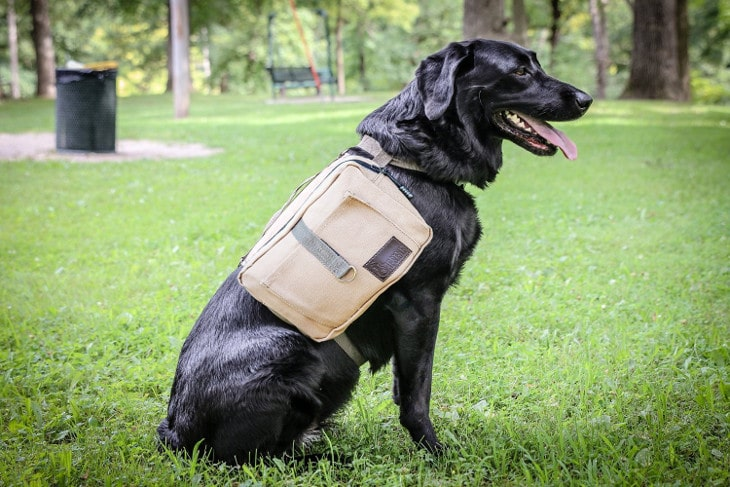 Saddlebag for dogs