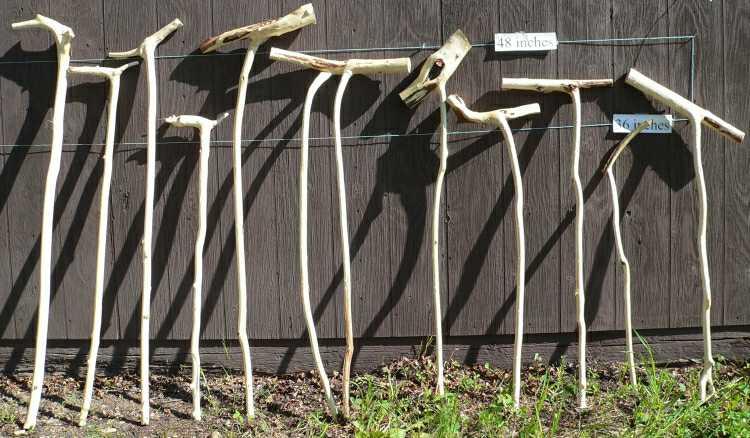 drying walking sticks