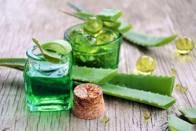 aloe vera leaves and gel