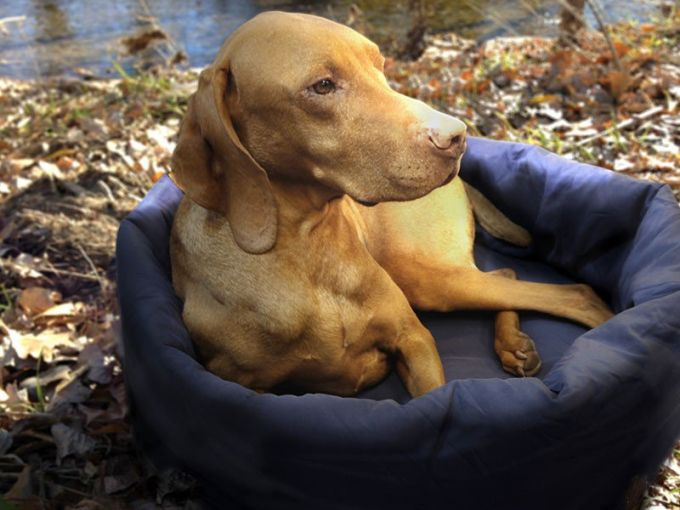 comfortable camping dog bed