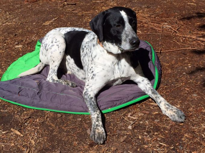 dog lying on camping bed