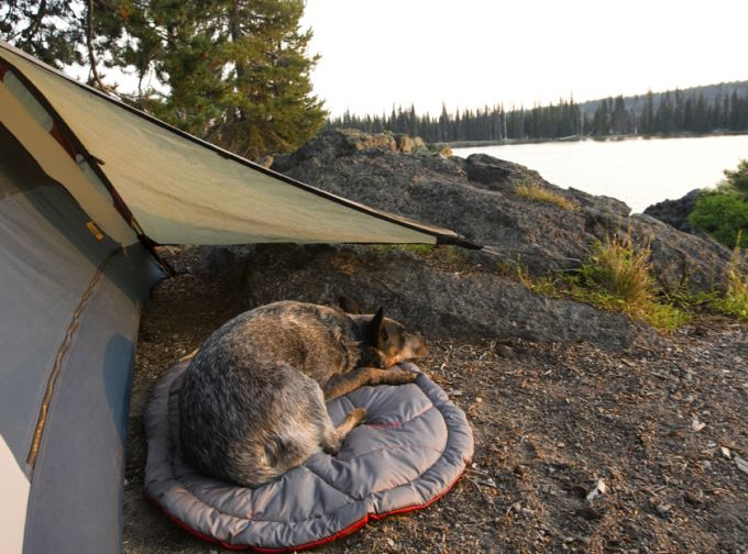 dog sleeping beside camp