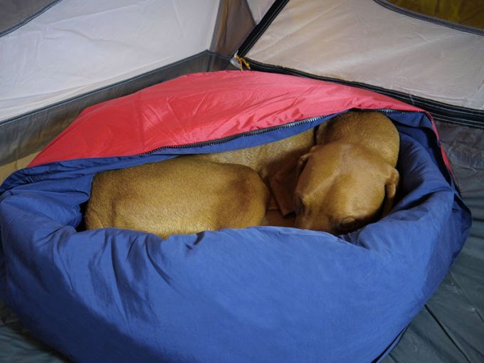 dog sleeping in his backpacking bad