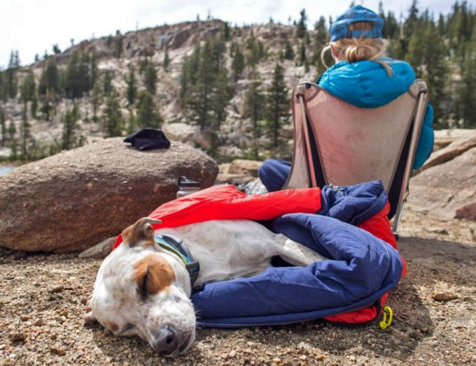 dog sleeping in his camping bed