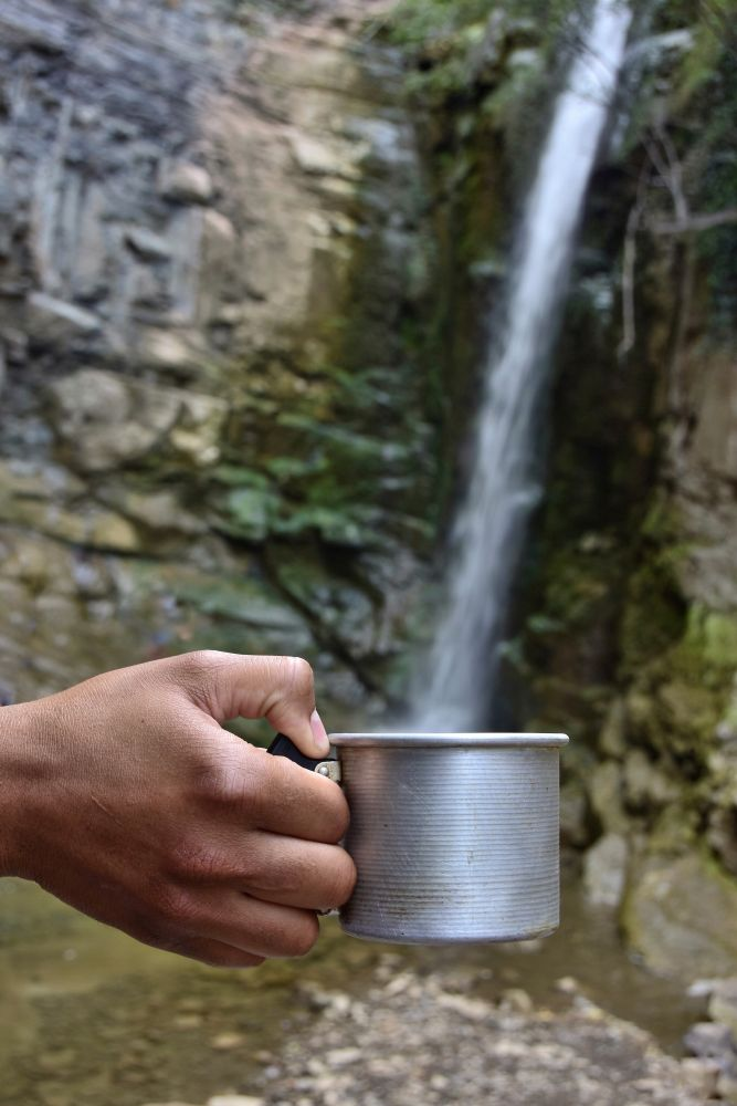 drinking water in the wild