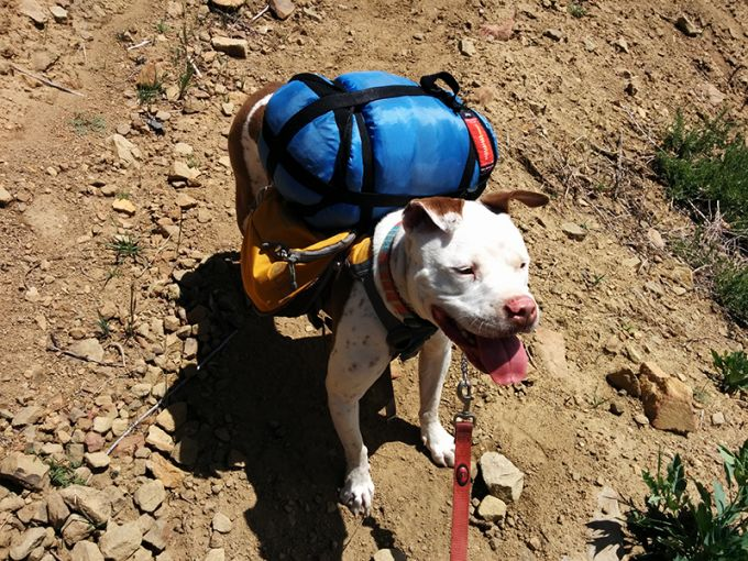 dog ready for hiking