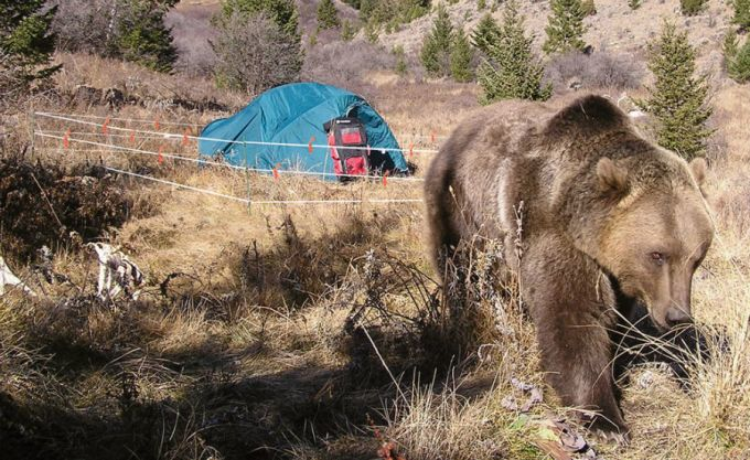 Bear leaving campsite