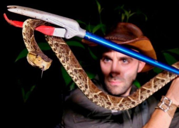 Encountering snakes in wilderness