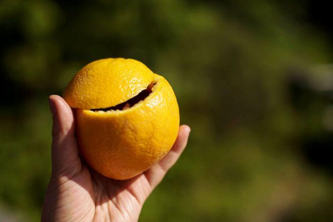Cutted Orange