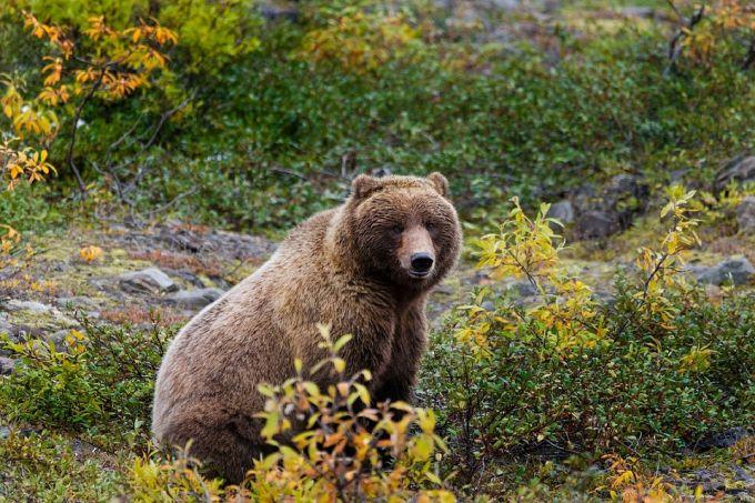 Bear is Looking at People